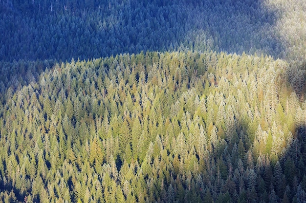 Widok z dołu wysokich drzew w wiosennym lesie