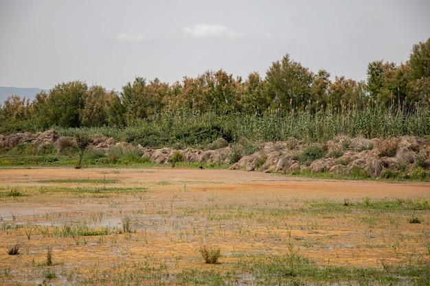 Widok z glossy ibis w delta del llobregat, el prat, hiszpania