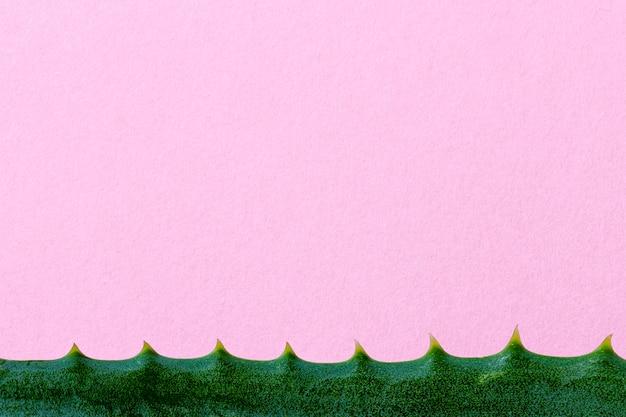 Widok z góry aloe vera roślina medyczna