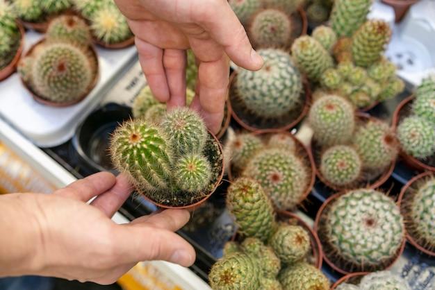 Widok z góry asortyment kaktusów w doniczkach