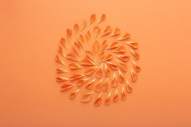 Widok z góry asortyment płatków kwiatów