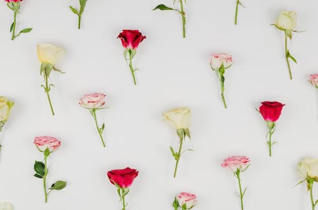 Widok z góry asortyment róż