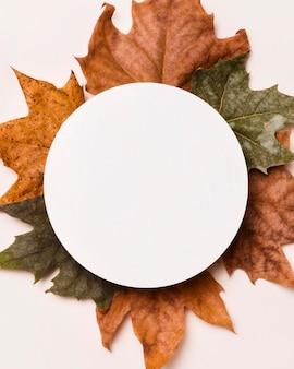 Widok z góry asortymentu liści jesienią z kółkiem papieru