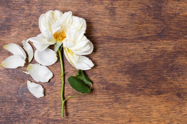 Widok z góry biała róża na stole