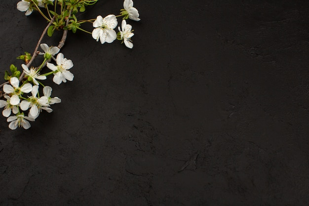 Widok z góry białe kwiaty na ciemnym tle