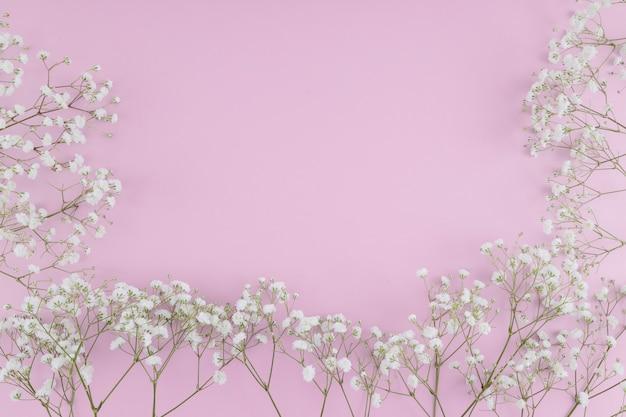 Widok z góry białe kwiaty ramki