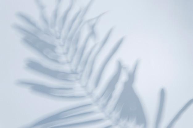 Widok z góry blady cień liścia