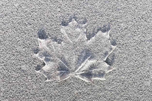 Widok z góry bliska jednego liścia klonu na okrywowej z świeżym zimowym mrozem