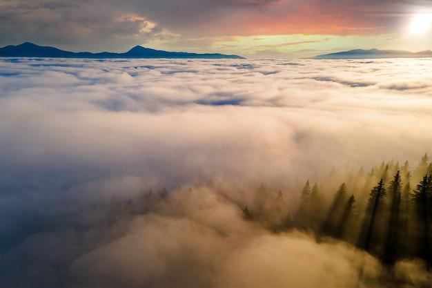 Widok z góry ciemne nastrojowe sosny w świerkowym mglistym lesie z jasnymi promieniami wschodu słońca świecącymi przez gałęzie w jesiennych górach.
