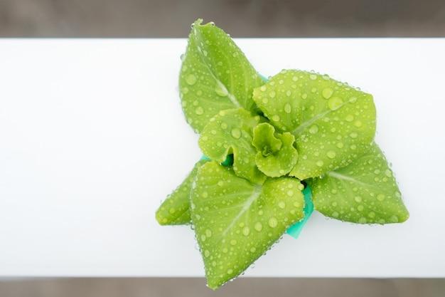 Widok z góry, gospodarstwo uprawy warzyw hydroponicznych