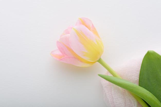 Widok z góry jeden różowy i żółty tulipan na białym tle z miejsca na kopię