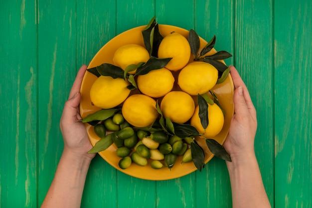 Widok z góry kobiecych rąk trzymających wiadro świeżych owoców, takich jak cytryny i kinkany na zielonej drewnianej ścianie