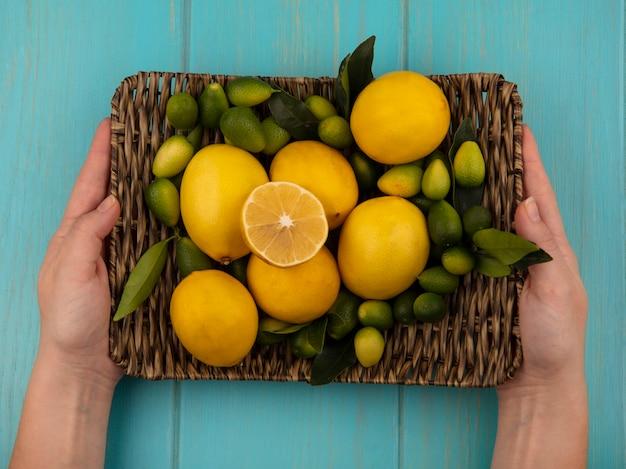 Widok z góry kobiecych rąk trzymających wiklinową tacę świeżych owoców, takich jak kinkans i cytryny na niebieskiej drewnianej ścianie