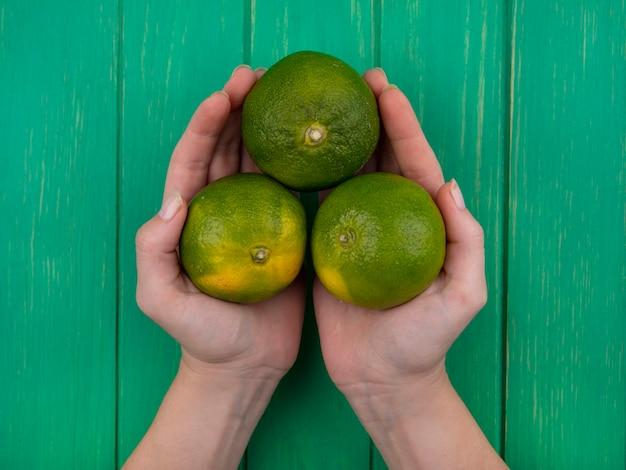 Widok z góry kobieta trzyma mandarynki w dłoniach na zielonej ścianie