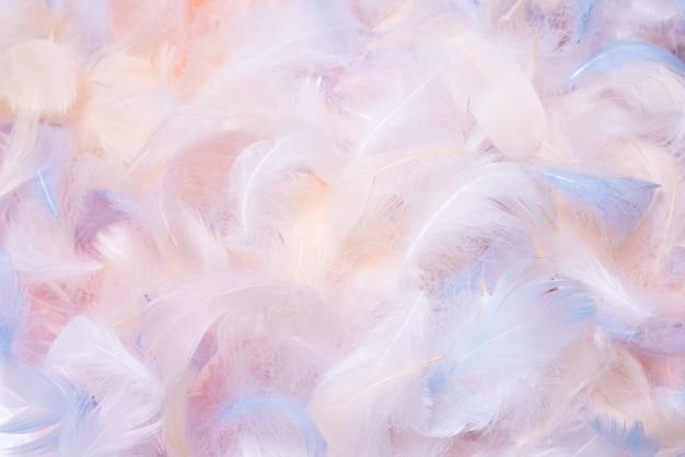 Widok z góry kolorowe pióro