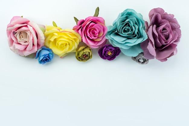 Widok z góry kolorowe róże piękne eleganckie kwiaty na białej, kolorowej roślinie kwiatowej