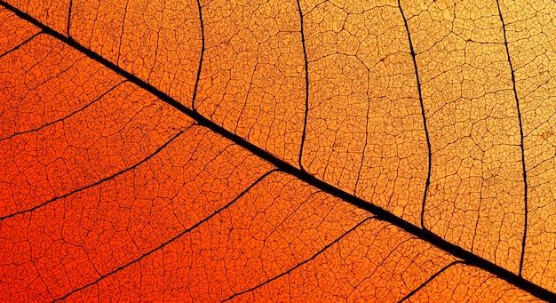 Widok z góry kolorowych liści z półprzezroczystą teksturą