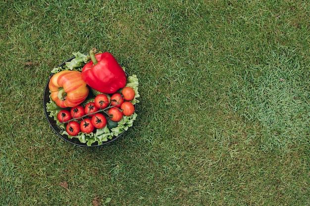 Widok z góry kolorowych warzyw na trawie w ogrodzie