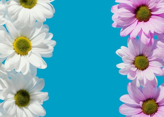 Widok z góry kolorowych wiosennych stokrotek z miejsca na kopię