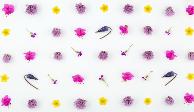 Widok z góry kompozycji kwiatowej na białej powierzchni. wzór kwitnących pąków roślin ogrodowych i liści paproci.