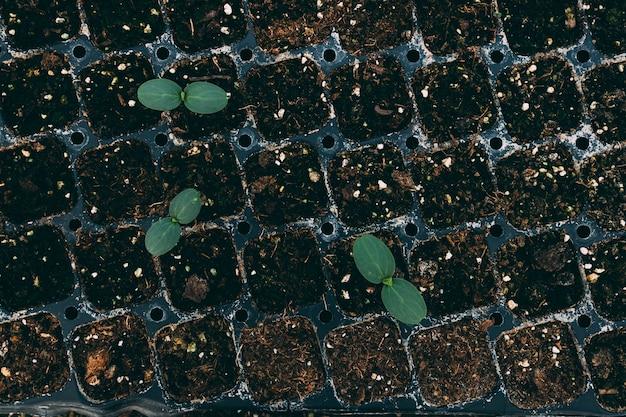 Widok z góry koncepcji sadu