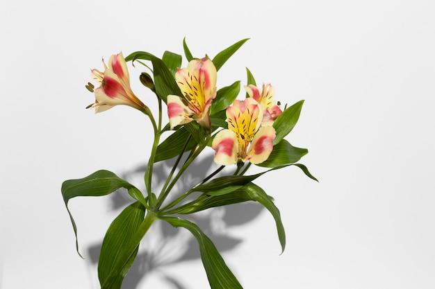 Widok z góry kwiat kwiat