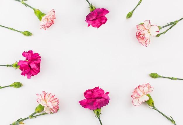 Widok z góry kwiatów goździka