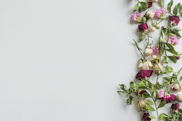 Widok z góry kwiatów i liści