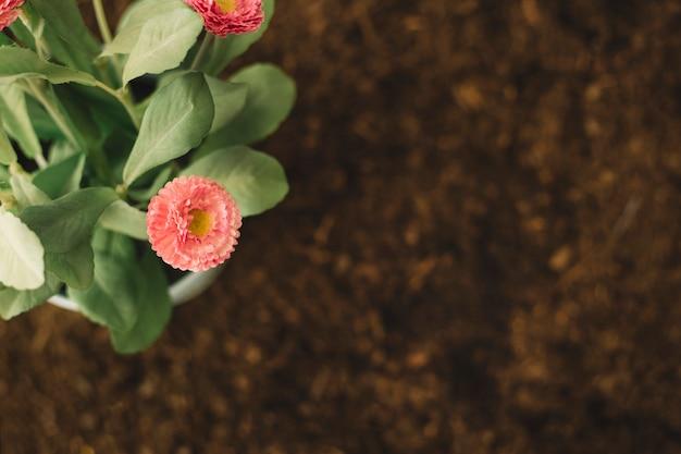 Widok z góry kwiatów na glebie