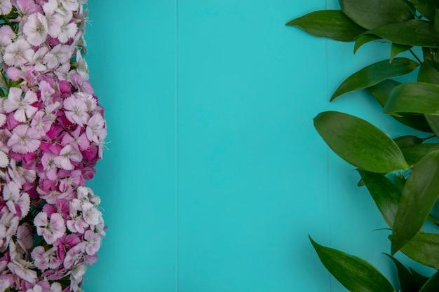 Widok z góry kwiatów o jasnoróżowych odcieniach z liśćmi na jasnoniebieskiej powierzchni