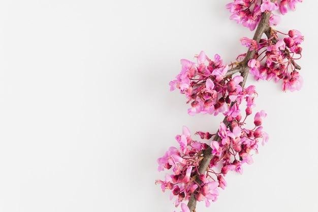 Widok z góry kwiaty z miejsca na kopię