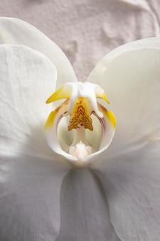 Widok z góry kwitła biała orchidea