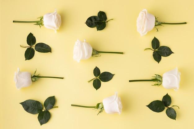 Widok z góry kwitnące róże