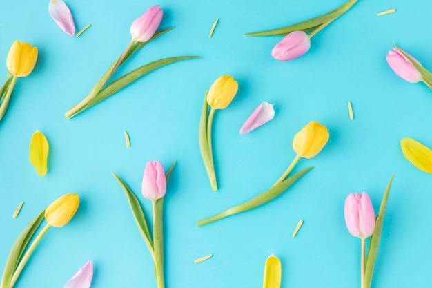 Widok z góry kwitnące tulipany