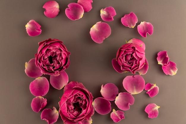 Widok z góry kwitnącej flory róży na brązowym tle. świąteczna kartka z życzeniami, układania kwiatów. widok z góry