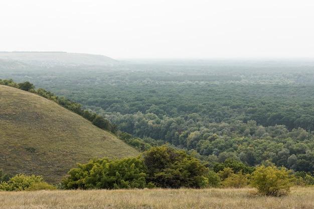 Widok z góry lasu jesienią