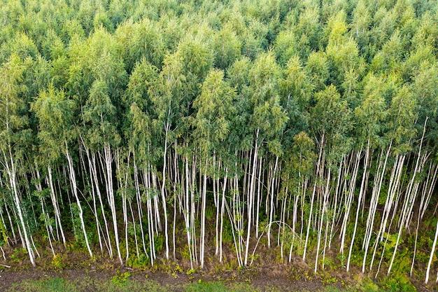 Widok z góry letnich zielonych drzew w lesie na wsi w polsce