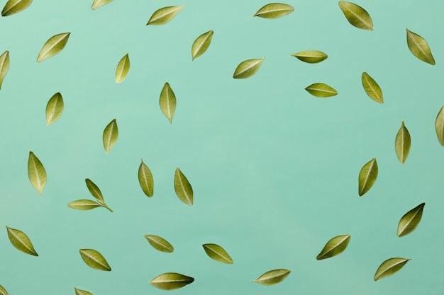 Widok z góry liści z miejsca na kopię