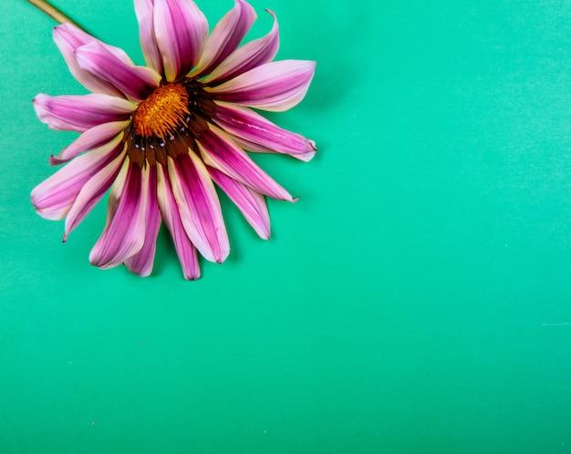 Widok z góry miejsca na kopię fioletowy rumianek na zielonym tle