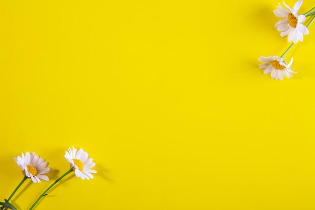 Widok z góry miejsca na kopię rumianku na żółtym tle