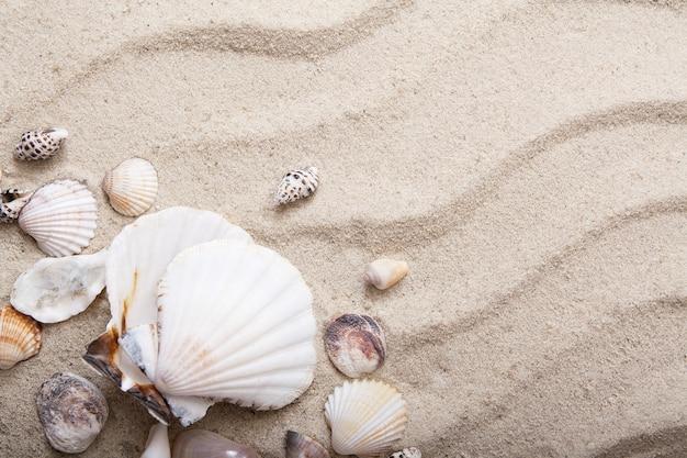 Widok z góry muszle w piasku