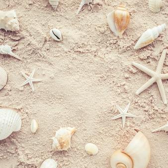 Widok z góry muszli na plaży. koncepcja lato