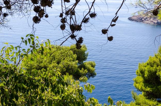 Widok z góry na adriatyk przez zielone liście