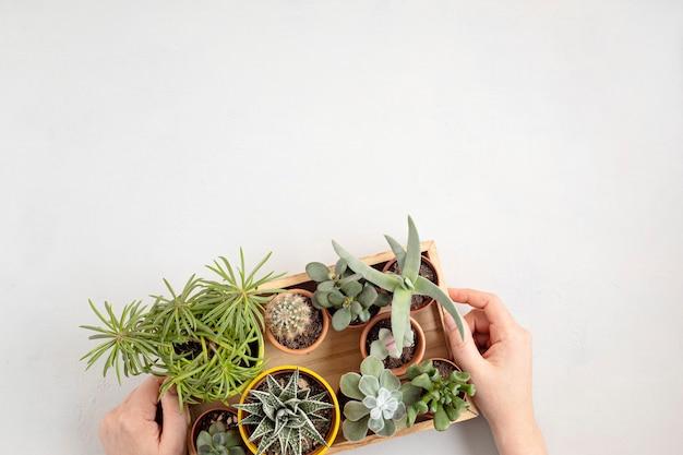 Widok z góry na domowe rośliny doniczkowe. ogrodnictwo domowe, koncepcja dekoracji wnętrz. skopiuj miejsce