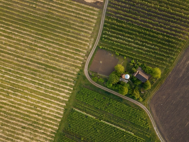 Widok z góry na dwa pola uprawne z różnymi uprawami z drogą dla samochodów i domem. zdjęcie z drona