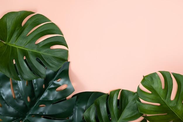 Widok z góry na gałąź tropikalnych liści palmowych na białym tle na pastelowym różowym tle z miejsca na kopię.