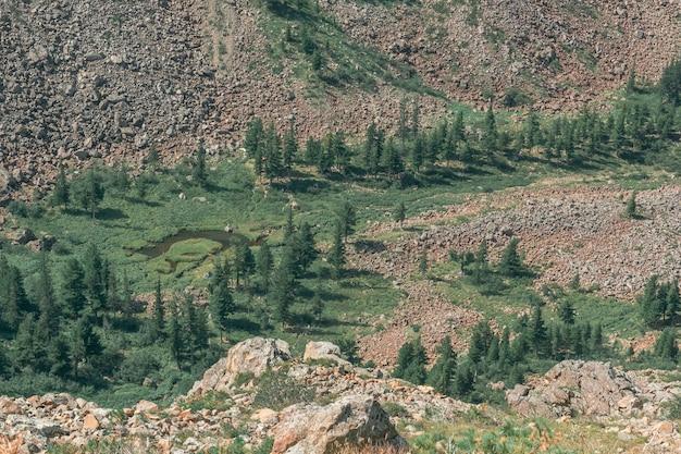 Widok z góry na górską dolinę ze strumieniem