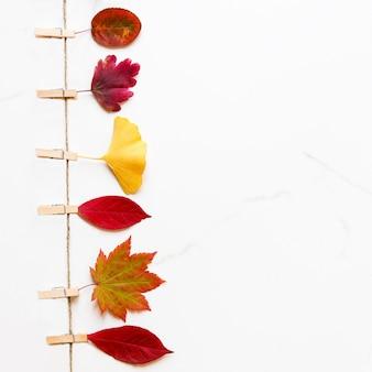 Widok z góry na jesienne liście - brzoza, klon japoński, miłorząb na sznurku z spinaczami do bielizny na tle białego marmuru. leżał na płasko