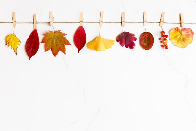 Widok z góry na jesienne liście - brzoza, klon japoński, miłorząb, pelargonia, jagody berberysu na sznurku z spinaczami do bielizny na białym marmurowym tle. leżał na płasko