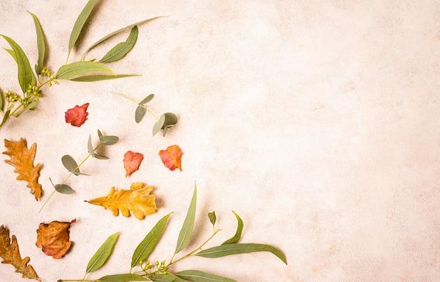 Widok z góry na jesienne liście i roślinność z miejsca na kopię